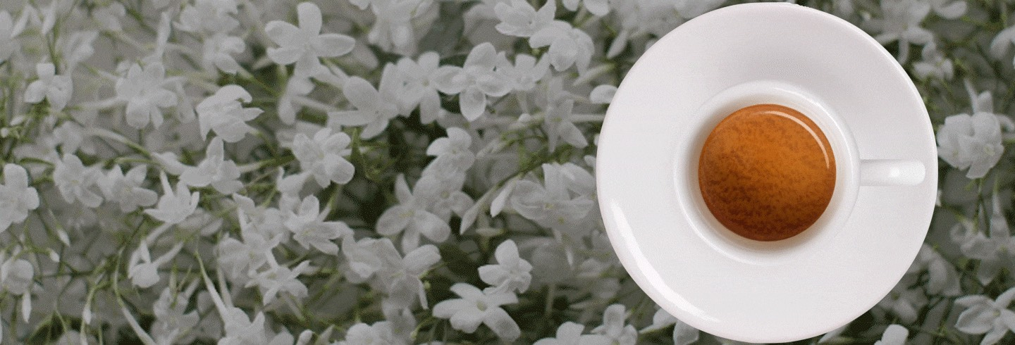 illy espresso on bed of flowers